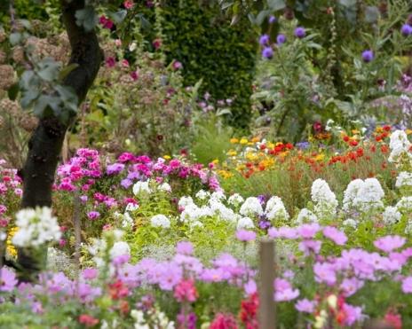 beutiful-beautiful-flower-garden-meadows-flowers-196150