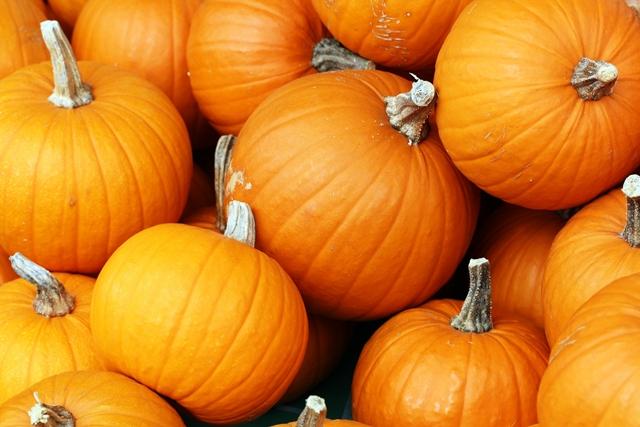 stonycreek-farm-pumpkin-harvest-festival-noblesville-in-lp